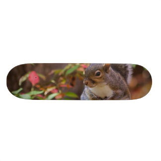 Squirrel Patiently Begs Skateboard Deck