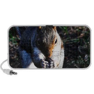 Squirrel PC Speakers