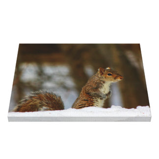 Squirrel Peaking Over The Snowbank Canvas Print