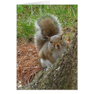"""Squirrel """"Peek-a-boo"""" Card"""
