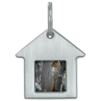 Squirrel Pet Tag