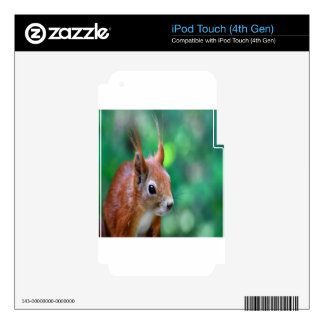Squirrel pets nature design decal for iPod touch 4G