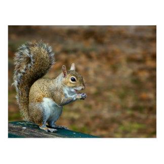 Squirrel Photo 2014 Calendar Postcard