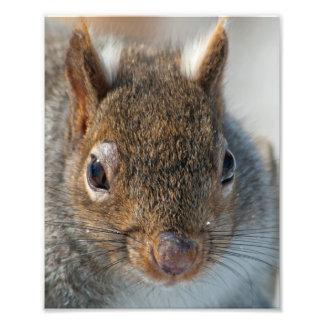 Squirrel Photo Enlargement