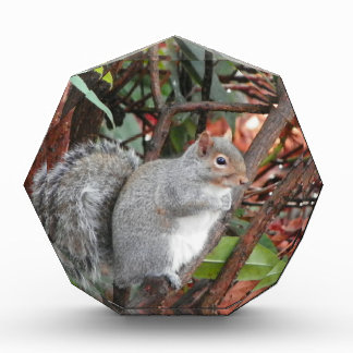 Squirrel Photo Gift