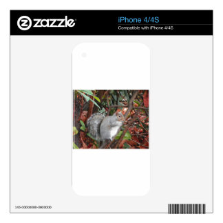 Squirrel Photo Gift iPhone 4 Skin