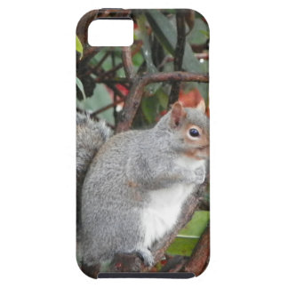 Squirrel Photo Gift iPhone SE/5/5s Case