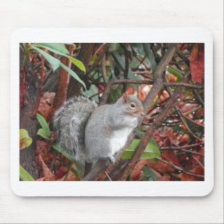 Squirrel Photo Gift Mouse Pad