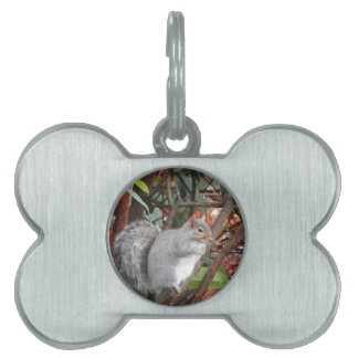 Squirrel Photo Gift Pet Name Tag