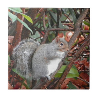 Squirrel Photo Gift Tile