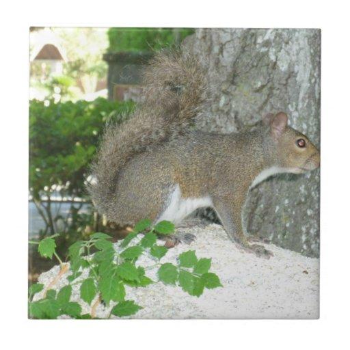 Squirrel photo image tile