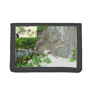 Squirrel photo image trifold wallet