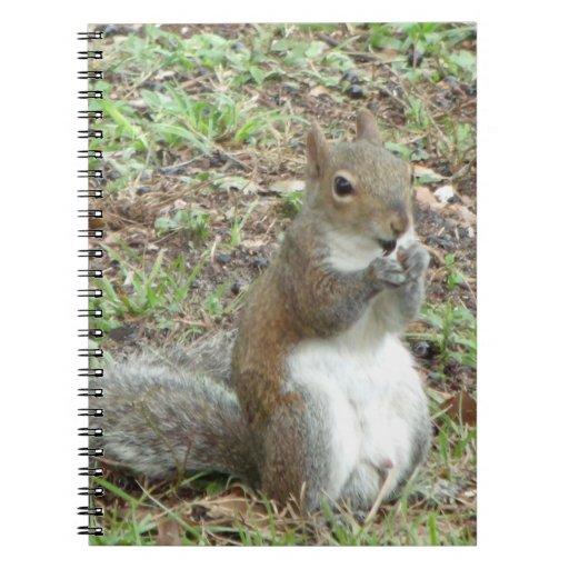 Squirrel Photo Notebook Spiral Notebooks