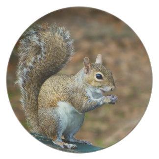 Squirrel Photo Plate