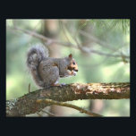 "Squirrel Photo Print<br><div class=""desc"">This photo print features a squirrel eating his lunch in the pines at Chatfield Hollow State Park in Killingworth,  Connecticut</div>"