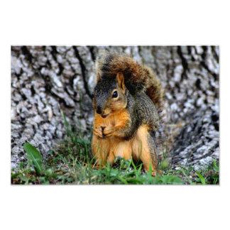 Squirrel Photo Print