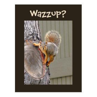 Squirrel Photograph Postcard