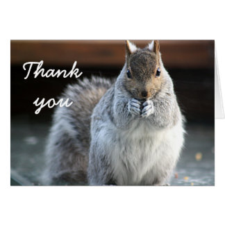Squirrel photography card