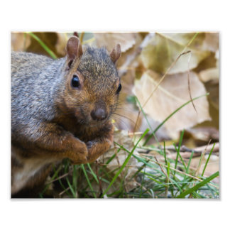 Squirrel Photography Print Photograph