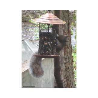 Squirrel Picture Stretched Canvas Prints