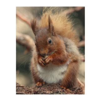 squirrel picture wood wall art