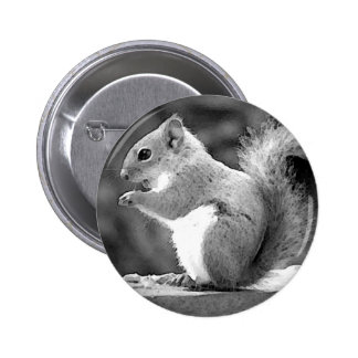 Squirrel Pinback Button