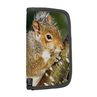 Squirrel Organizer