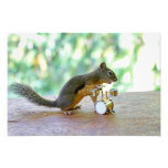 Squirrel Playing Drums Photo Print