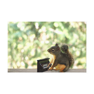 Squirrel Playing Piano Stretched Canvas Print