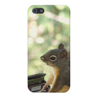 Squirrel Playing Piano iPhone 5 Cases