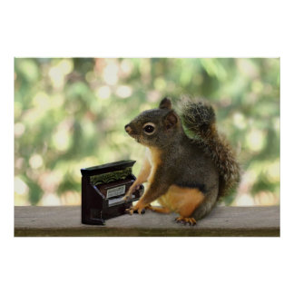 Squirrel Playing Piano Poster