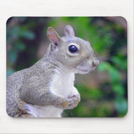Squirrel Portrait Mouse Pad