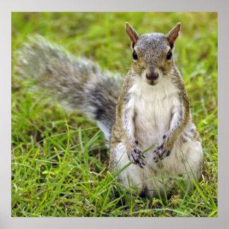Squirrel Portrait Poster