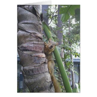 Squirrel posing on tree card