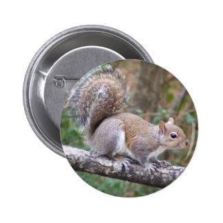 Squirrel Posing Pinback Button