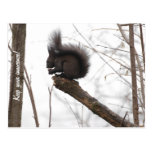 Squirrel Post Card