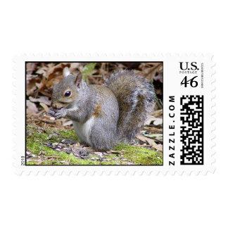 Squirrel Postage