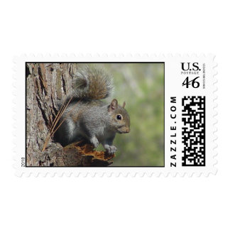 Squirrel Postage 2
