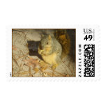 Squirrel Postage Stamp
