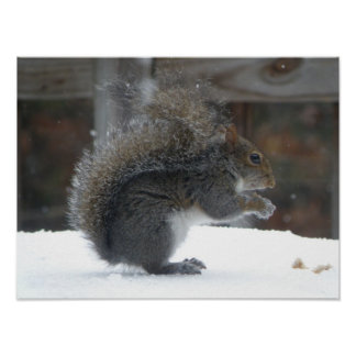 Squirrel Poster