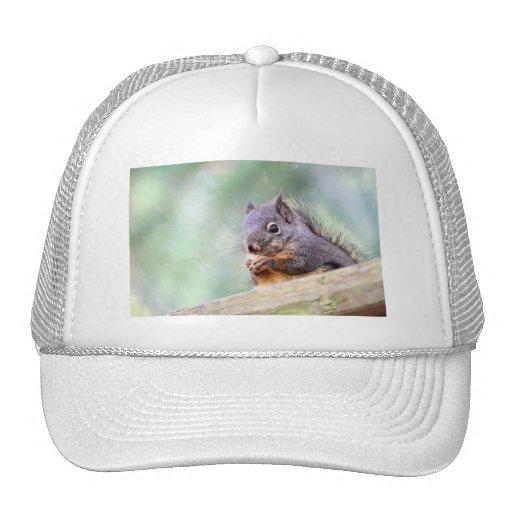 Squirrel Praying for Peanuts Mesh Hat