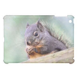 Squirrel Praying for Peanuts Cover For The iPad Mini