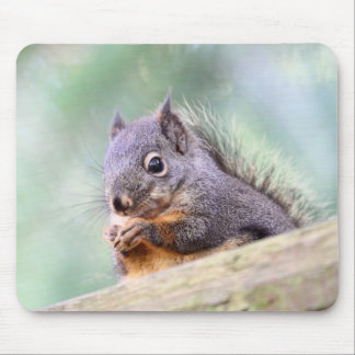 Squirrel Praying for Peanuts Mouse Pad