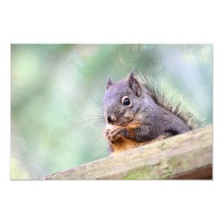 Squirrel Praying for Peanuts Photo Print