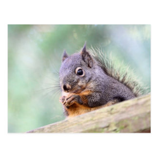 Squirrel Praying for Peanuts Post Card