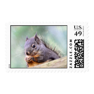 Squirrel Praying for Peanuts Postage