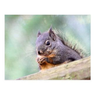 Squirrel Praying for Peanuts Postcard