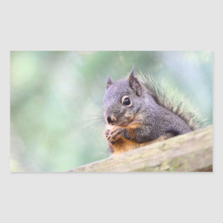 Squirrel Praying for Peanuts Rectangle Stickers