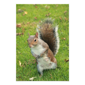 Squirrel Print Photograph