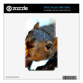 Squirrel Reaching iPod Touch 4G Skins